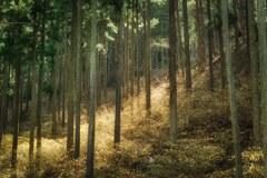 三椏の森を歩く ⑧