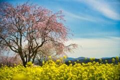 春のぶるーすかい 3