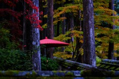 野点傘と秋 ⅰ