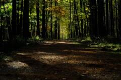 西ノ湖の森