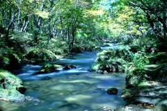 秋の木漏れ日 (3)