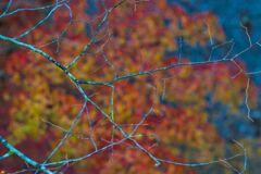 渓谷の紅葉 ⅱ