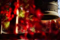 『金蔵院』の秋