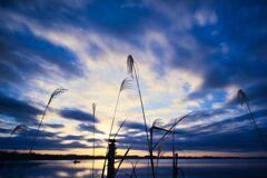 初冬の遊水地(出漁)