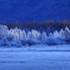 小田代ヶ原 #34 『凍てつく湿原』