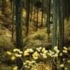 三椏の森 ⑥