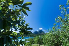 タヒチ国花ティアレ&ボラボラ島オマテヌ山