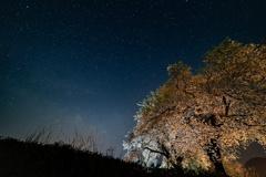 黒岩の夫婦桜3