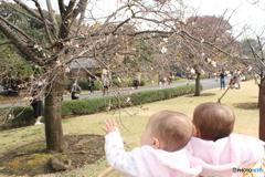 秋の一般公開に桜??
