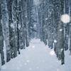 白い白樺林