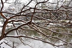 雪とサルスベリ