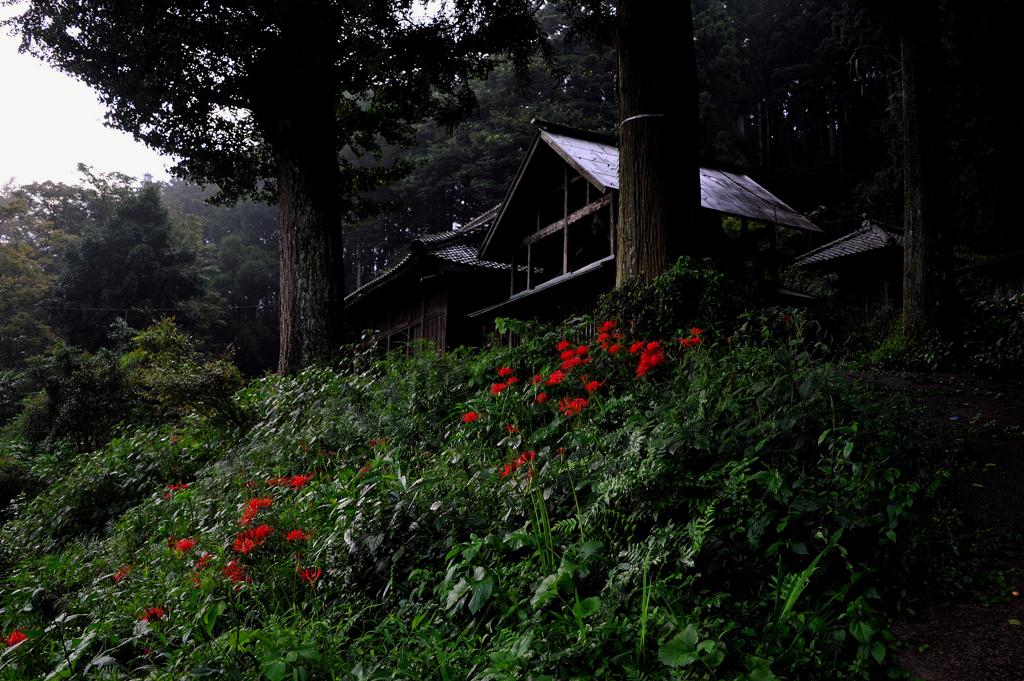 曼珠沙華の咲く神社