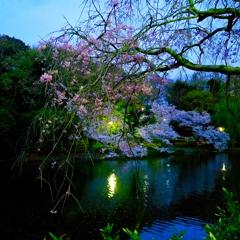 夜桜の公園