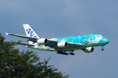 "ANA A380 ""Flying Honu"" 二号機"