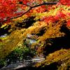 本土寺の秋・・千葉県
