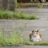 キモ座ったネコ