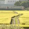 田んぼと電車