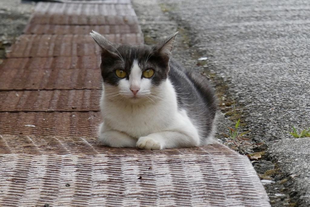 若いママ野良ネコ