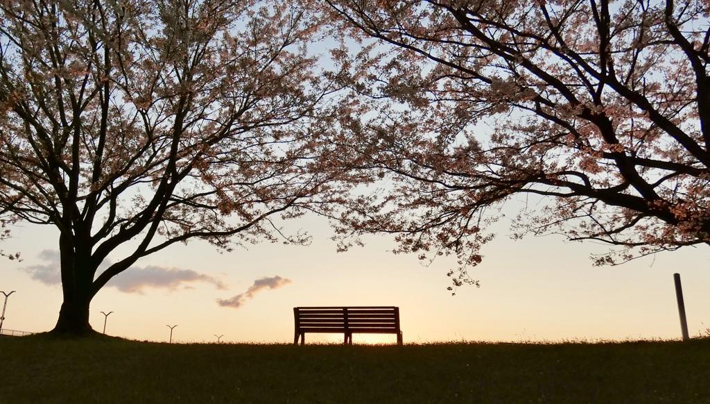 夕暮れ〜桜のベンチ