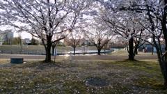 夕陽の公園