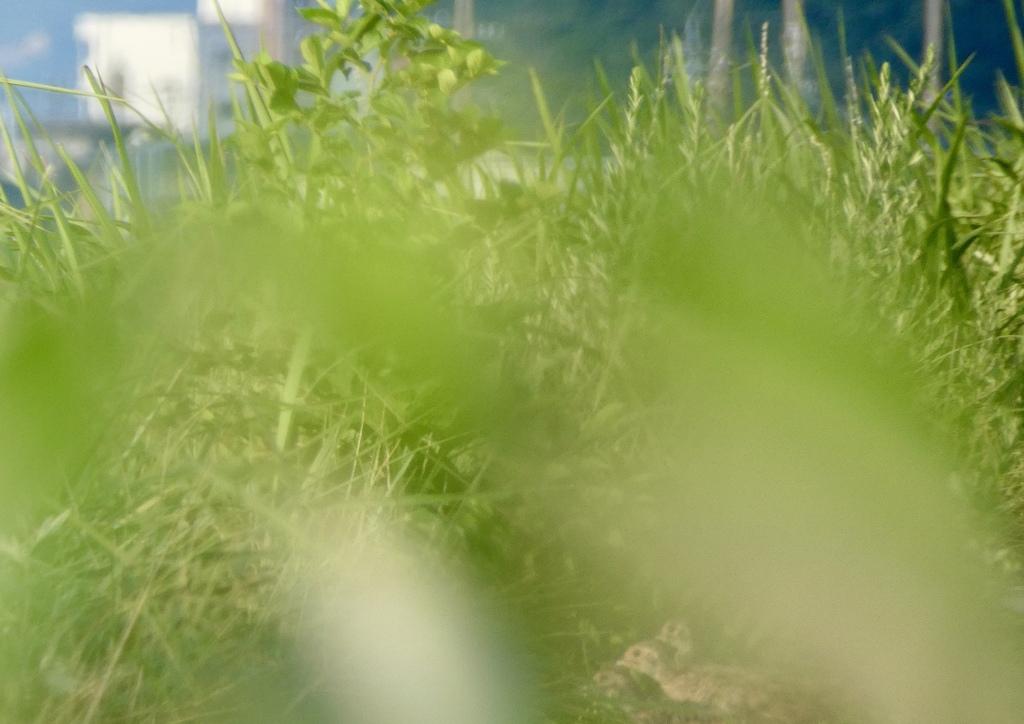 草むら入りました。