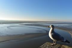 モンサンミッシェルの鳥