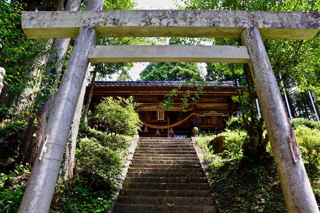 杉本貞観杉のパワーをもらいに行ってきました。