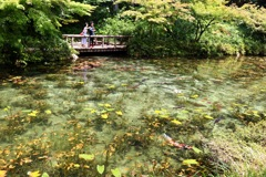 モネの池_3