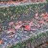 DSCF5339 名塩八幡神社の階段