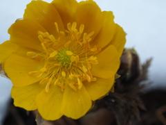 林道の雪より芽生えた花