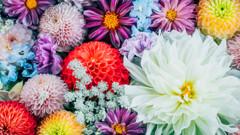 手水舎の花