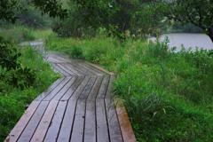 初秋の湿生花園・雨
