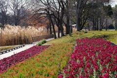 長居植物園 冬の花壇