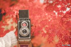 二眼レフと真っ赤な秋色