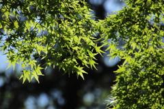 公園散策―新緑