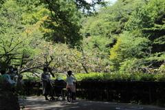 公園散策―緑の中には