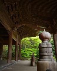 妙本寺の青紅葉