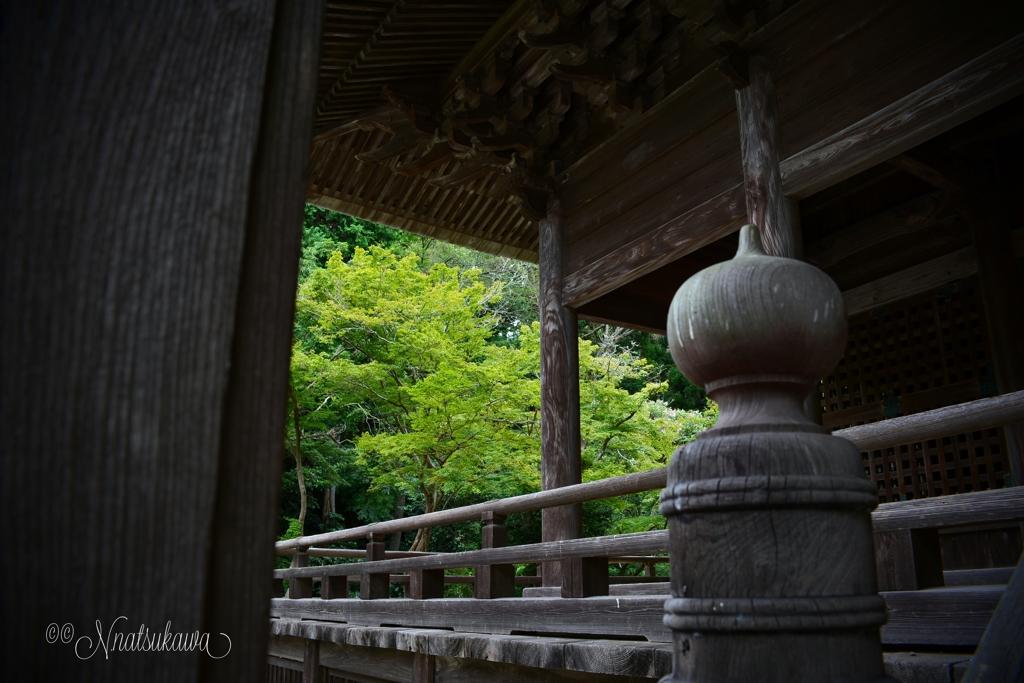 鎌倉妙本寺の青紅葉