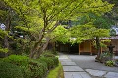 鎌倉覚園寺 新緑