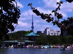 上野不忍池 (2)