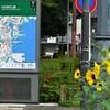 向日葵の咲く街角②