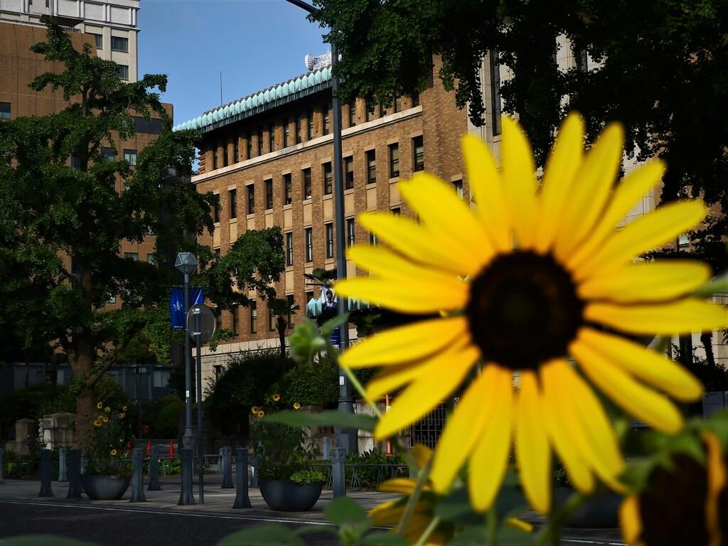向日葵の咲く街角⑤