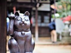 豪徳寺(招き猫発祥の寺)