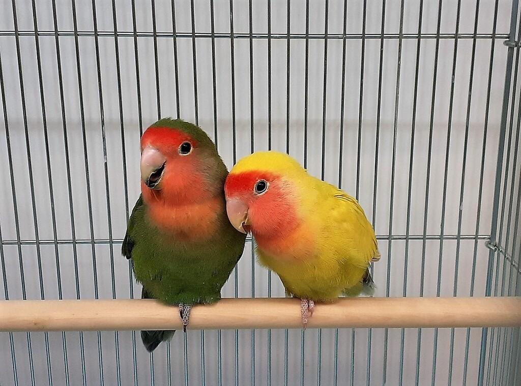 LOVE&LOVE