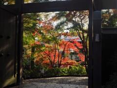 晩秋の深大寺 東門