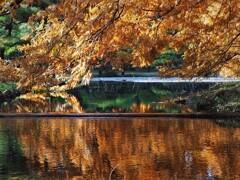 晩秋の神代植物公園