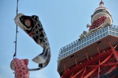 東京タワーと鯉のぼり③