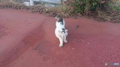 諏訪湖に居た猫(ФωФ)