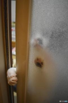 入れてよ~(ФωФ)┳┳