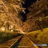 廃線跡の夜桜